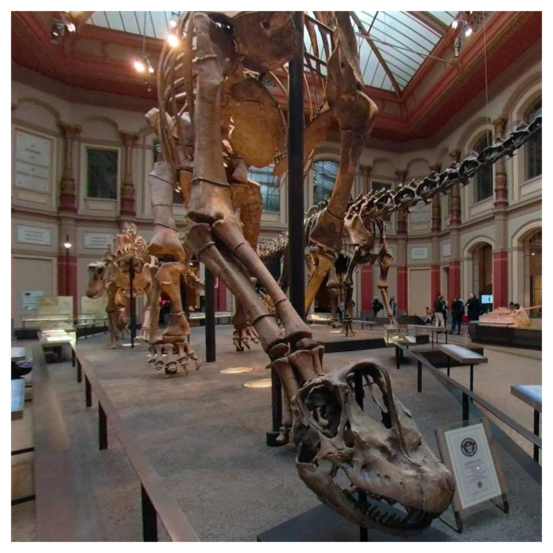 Museum für Naturkunde - Saurierwelt