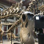 Museum für Naturkunde Berlin ist Unterstützer von RemmyVR (VR Brille für Senioren)
